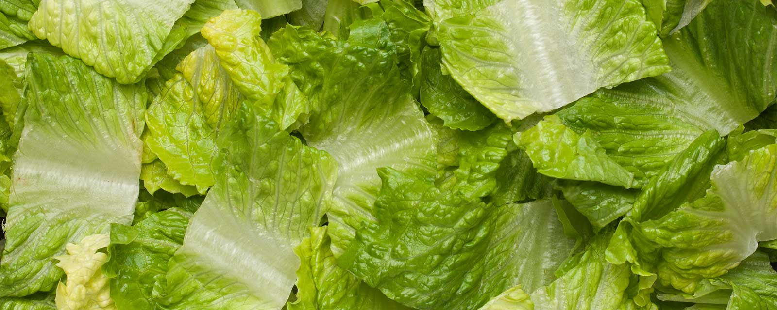 Update: Chopped Romaine now from Salinas Valley